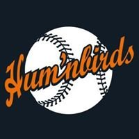 Humnbirds Baseball