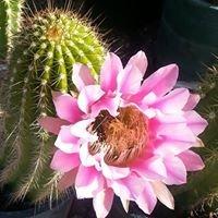 Valley Verde Community Garden Center & Desert Gift Shop