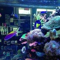 Tanks A Lot Aquariums