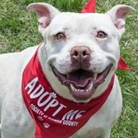 Humane Society of Rowan County - Official Site