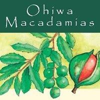 Ohiwa Macadamias