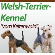 Welsh Terrier vom Keltenwald