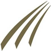 Momentum Financial Group
