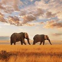 Mission Elephant