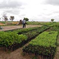 Centre agro-forestier du Niombato