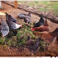 Marra Farm Chicken Co-op