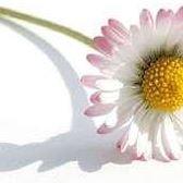 Daisy Chain Herbals & Organics