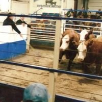 Kingsville Livestock Auction