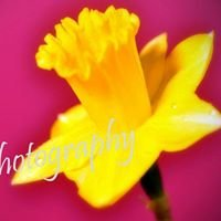 Saby Photography