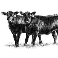 Scotland County Livestock Auction
