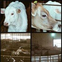 Kinder Livestock Auction