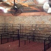 Show Cattle & Equipment for Sale Only