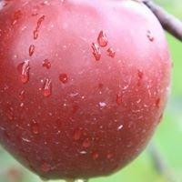Empire Fruit Growers Co-Op Inc.