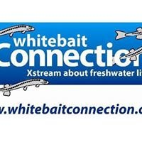 Whitebait Connection- Mountains to Sea Conservation Trust