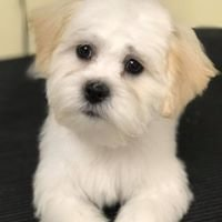 Dang Dirty Dog Pet Spa