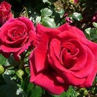 Country Garden Roses