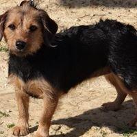 Spencer County Animal Shelter