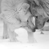 Aventuraid/Parc Mahikan: L'aventure entre chiens et loups