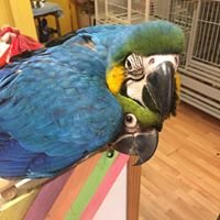 Fancy Feathers Aviary