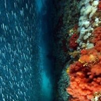 Browning Pass Hideaway Dive Resort