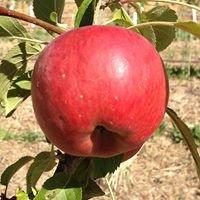 Heritage Fruit Trees