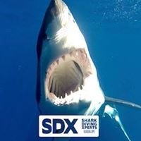 Shark Diving Xperts