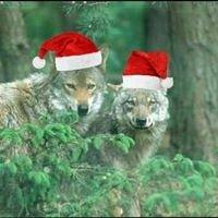 "NABU Fachgruppe ""Zukunft Wolf"""