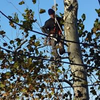 Mighty Oak's Tree Service