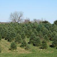 Grohmann's Christmas Tree Farm