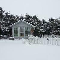 Bybee Christmas Tree Farm