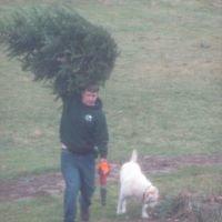 Country Christmas Tree Farm