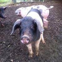 Clonanny Farm