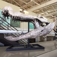 The University of Texas Vertebrate Paleontology Collections