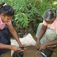 Native Forest Foundation - Gampaha, Sri Lanka