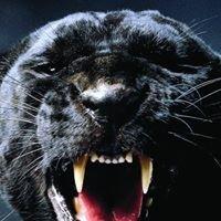 Panther's Run Golf Links