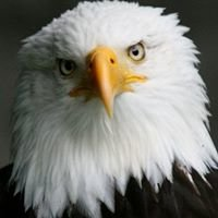 Skagit Eagle Festival