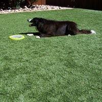 Drake Lawn Sprinkler & Artificial grass