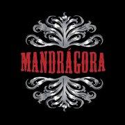 Mandrágora