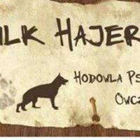 """Hodowla owczarków niemieckich """"Wilk Hajera"""""""