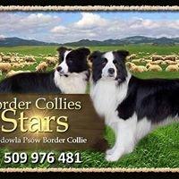 Stars Border  Collies  FCI