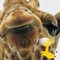Przedszkole Żyrafa Bronowice
