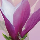 Kwiaciarnia Magnolia 3