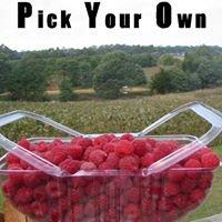 Kinglake Raspberries