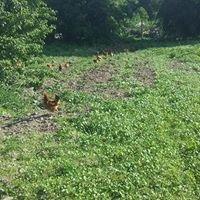 Eko- farma u Piotra