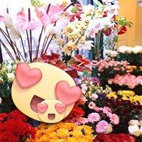 Kwiaciarnia Kamelia