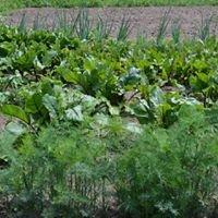 Kucharka w polu - Warzywa bez Chemii.