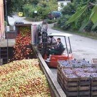 Lütauer Süssmosterei GmbH , Fruchtsaftkelterei