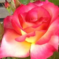 Roseland Nursery