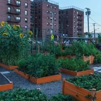 RYTF Urban Farm & Community Garden
