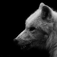 All Wolves No Sheep Tattoo Parlour